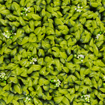 muro verde floral
