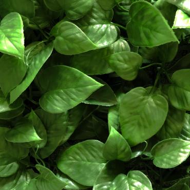 muro hoja verde