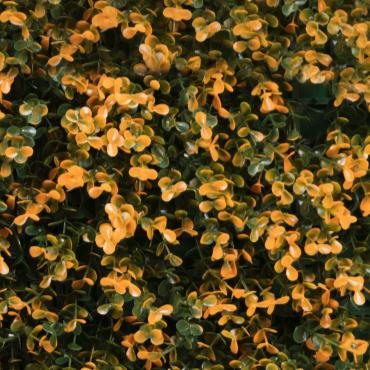 muro verde naranja